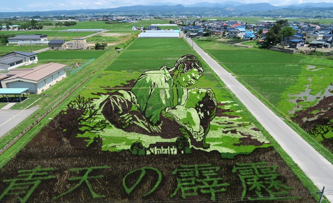 2015年田んぼアート「風と共に去りぬ」