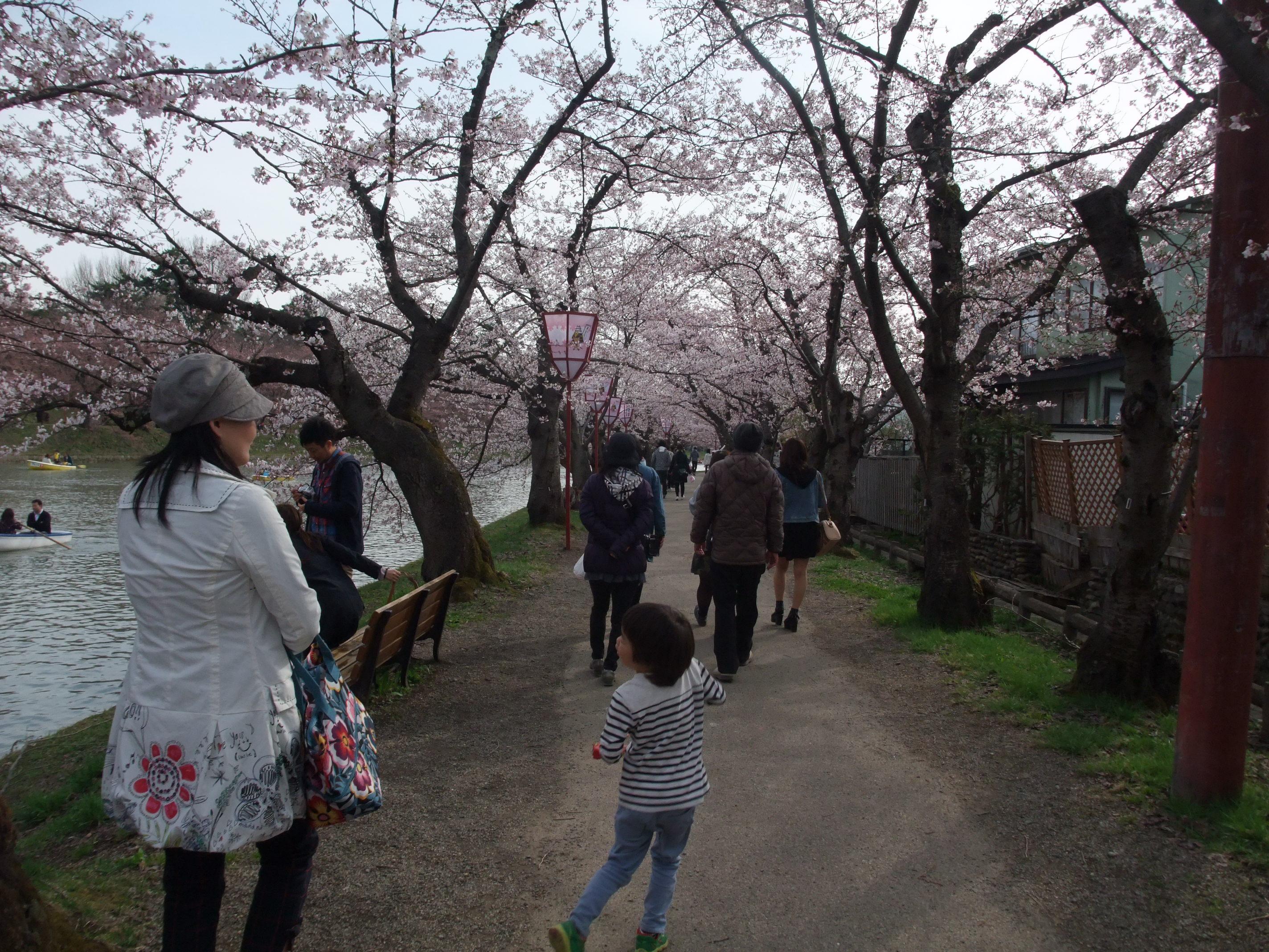 2015年4月19日の弘前城公園西堀付近