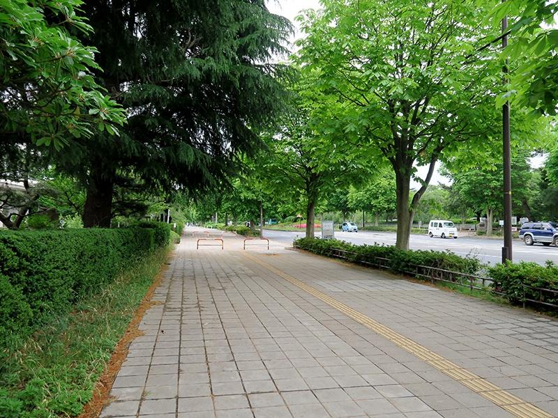 試験会場まで歩く。緑多い。