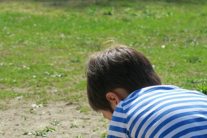 息子の茶色い髪