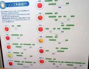 リンゴの系図