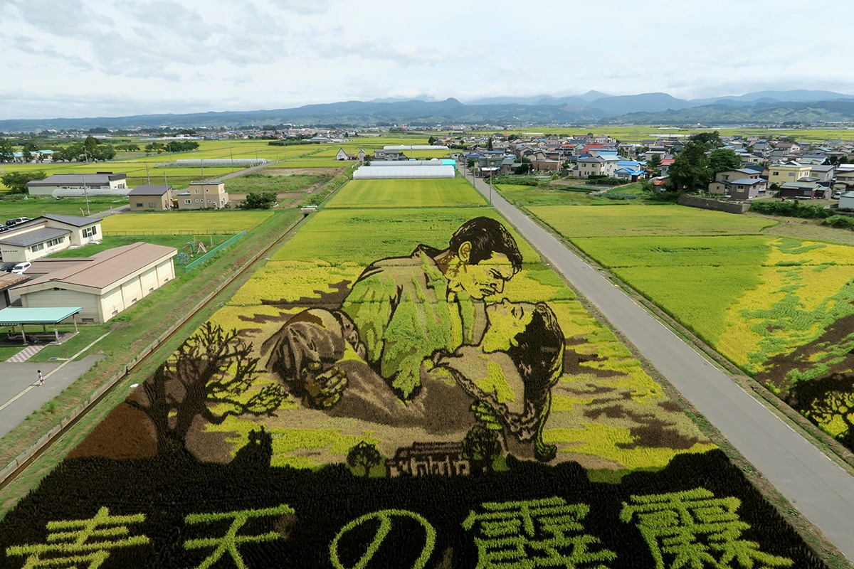 黄金色に色づいた田舎館村の田んぼアート「風と共に去りぬ」