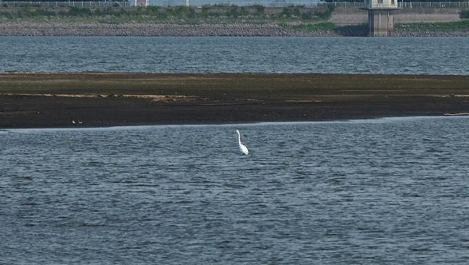 不確定名「白い鳥」(P)