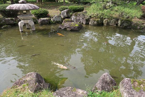 池には鯉。受付でエサを100円で売っています