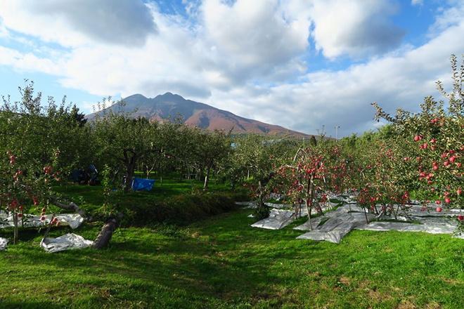 岩木山の麓にひろがるリンゴ畑