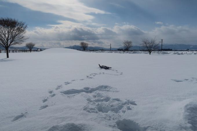 雪野原に寝転ぶ息子