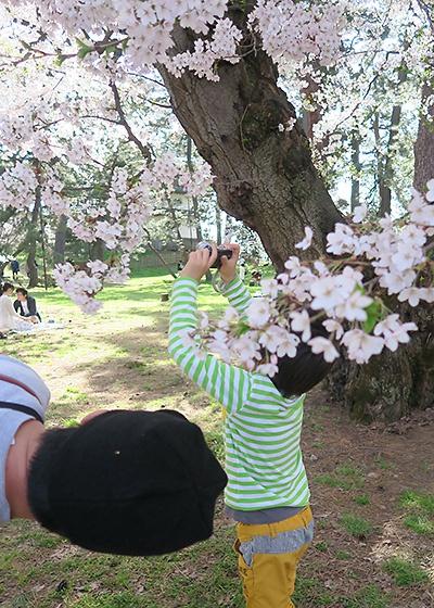 桜を撮る息子と、同じ目線で見上げる講師
