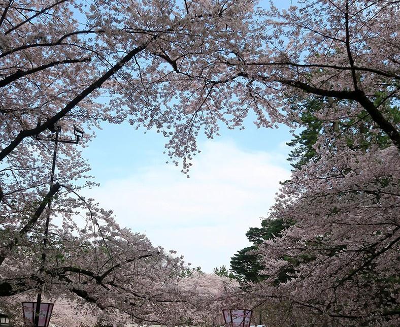 弘前公園のハート(4月22日撮影)