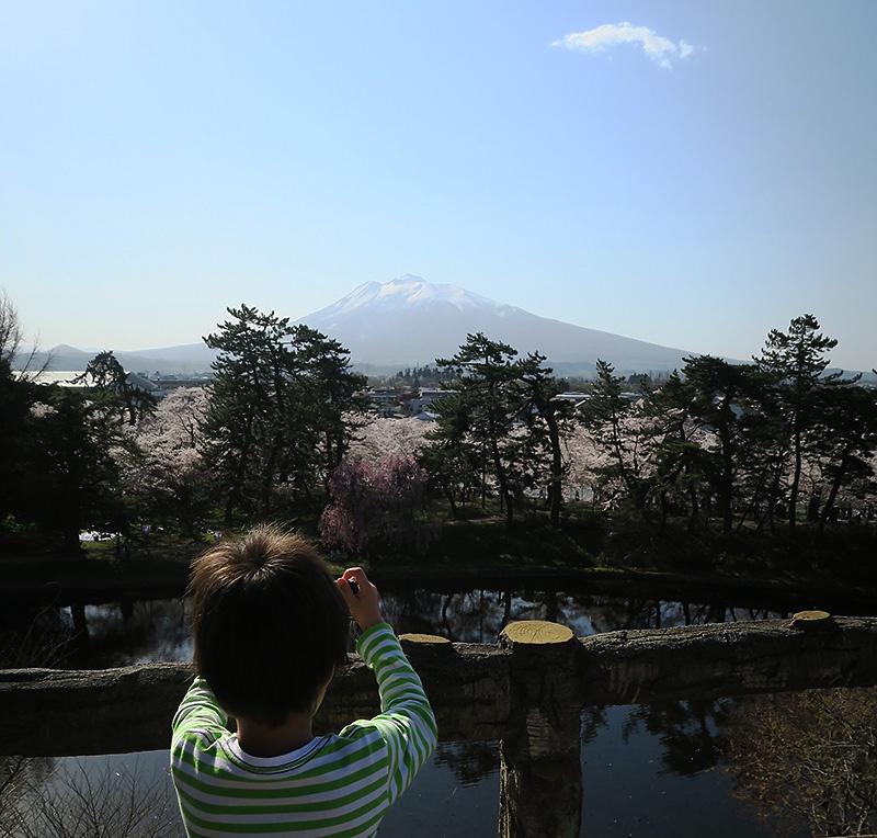 弘前公園本丸展望台から岩木山と桜を狙う息子