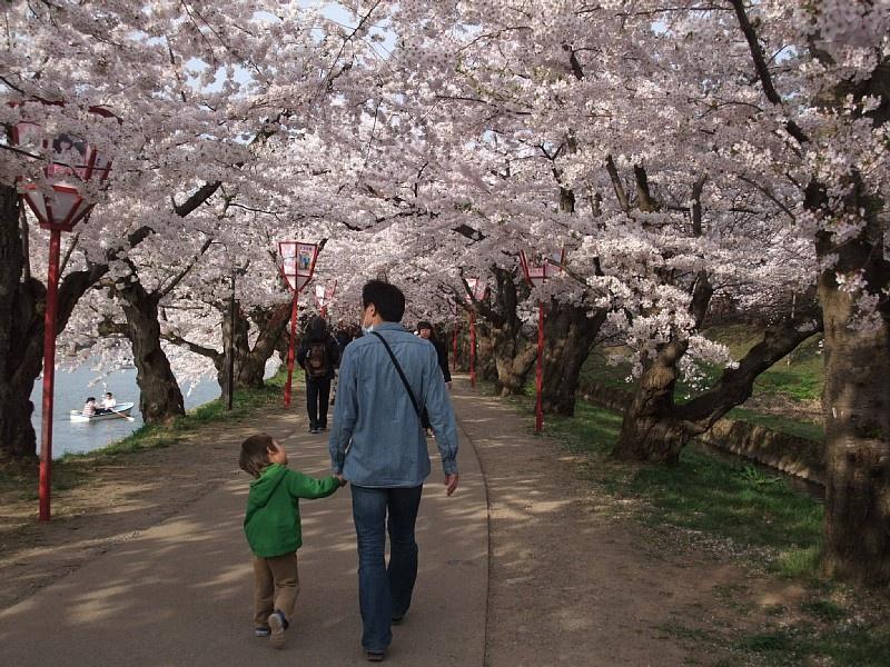 桜のトンネルを歩く夫と息子(2015年4月28日撮影)