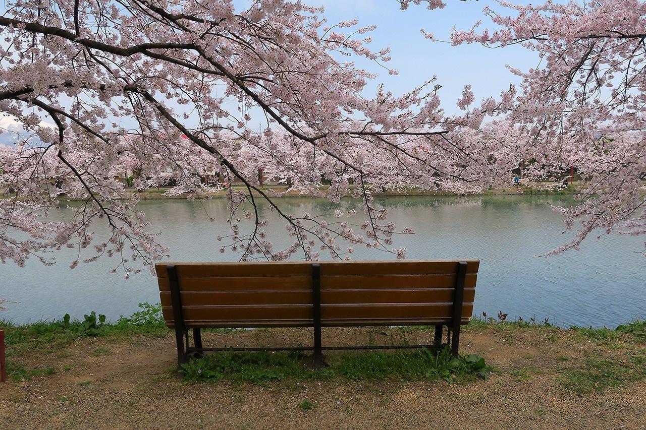 弘前公園・桜のトンネル