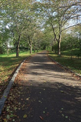 落ち葉の散る道を進む