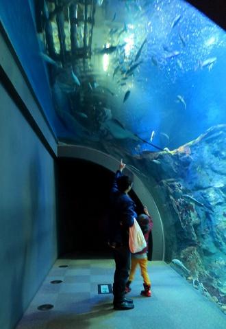水槽のトンネルを通る