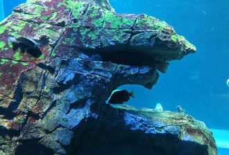 水槽内に再現されたゴジラ岩(口に魚入り)
