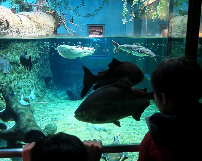 大きな魚がゆったり泳ぐ南米の海