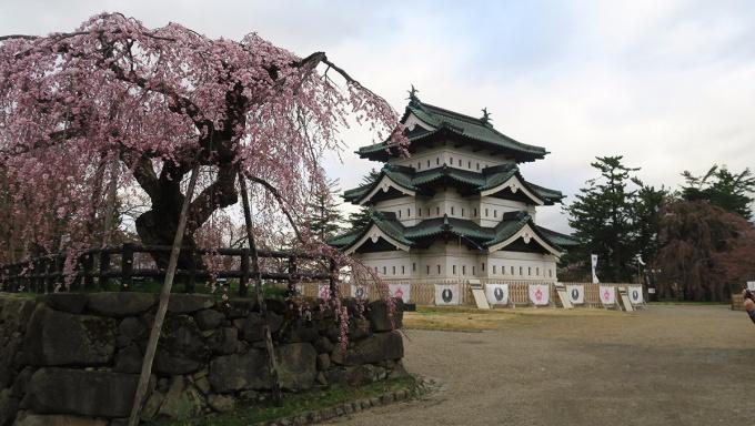 弘前城天守閣と弘前枝垂れ