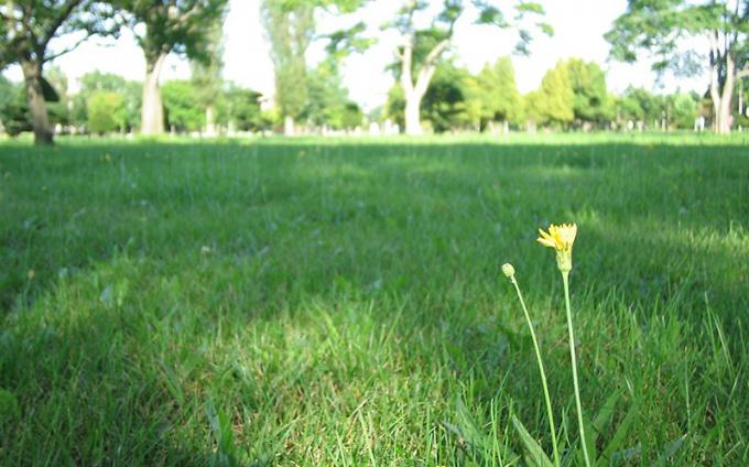 道立図書館の草っぱらにて(2007年8月撮影)