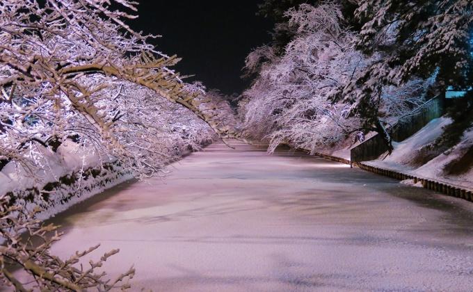 冬に咲くさくらライトアップ中の弘前公園外堀
