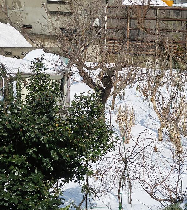 窓から見えるお庭