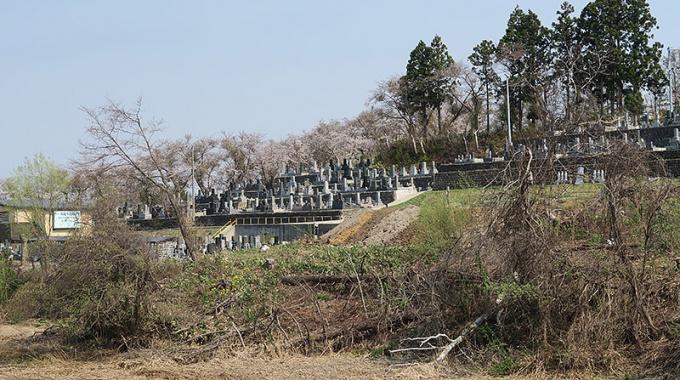 桜に囲まれた墓地