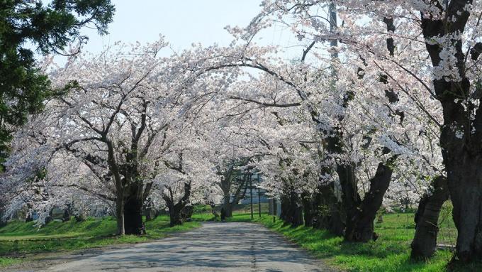 松丘保養園までの道