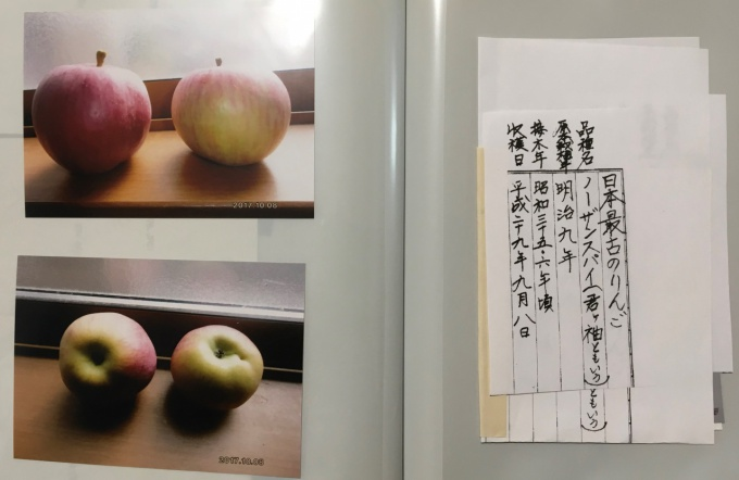 2017年に収穫された果実