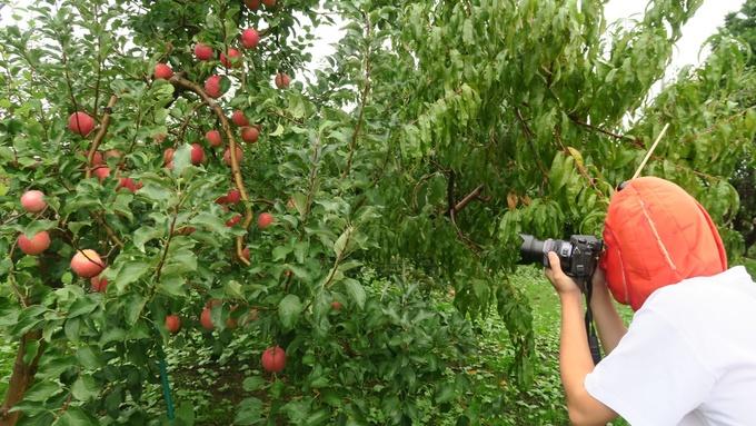 リンゴを激写するりんご飴マン