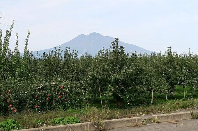 りんご園と岩木山
