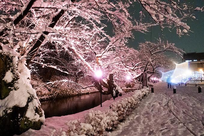 歩道も奥まで桜色
