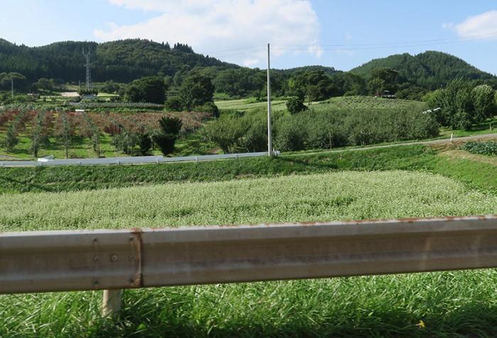 津軽地方で見なかったソバ畑