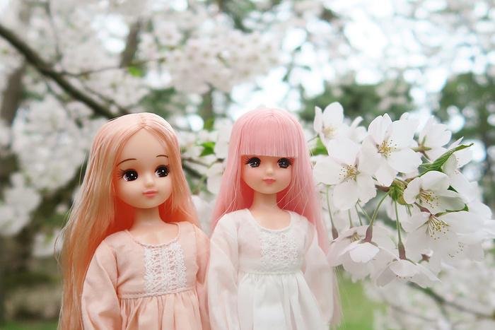 弘前公園の桜と桜色のリカちゃん