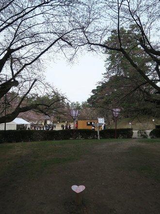 桜のハートはまだつぼみ