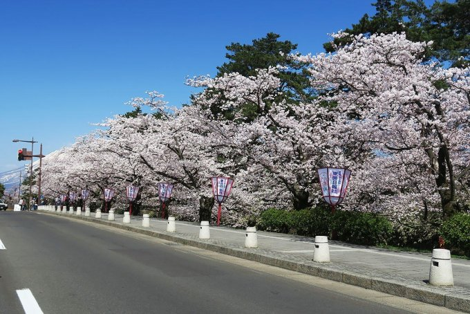 外濠の桜と岩木山