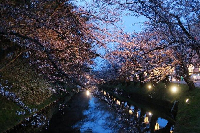市民会館出入り口の桜