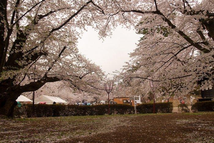 近年話題の桜のハートスポット